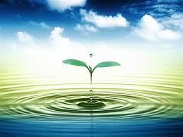 thau rửa bể nước ăn