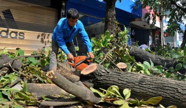 Dịch vụ chặt cây xanh tại Hà Nội GIÁ RẺ - 0985.018.234