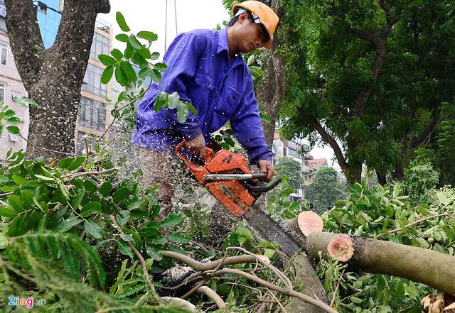Dịch vụ chặt cây xanh quận Hoàng Mai